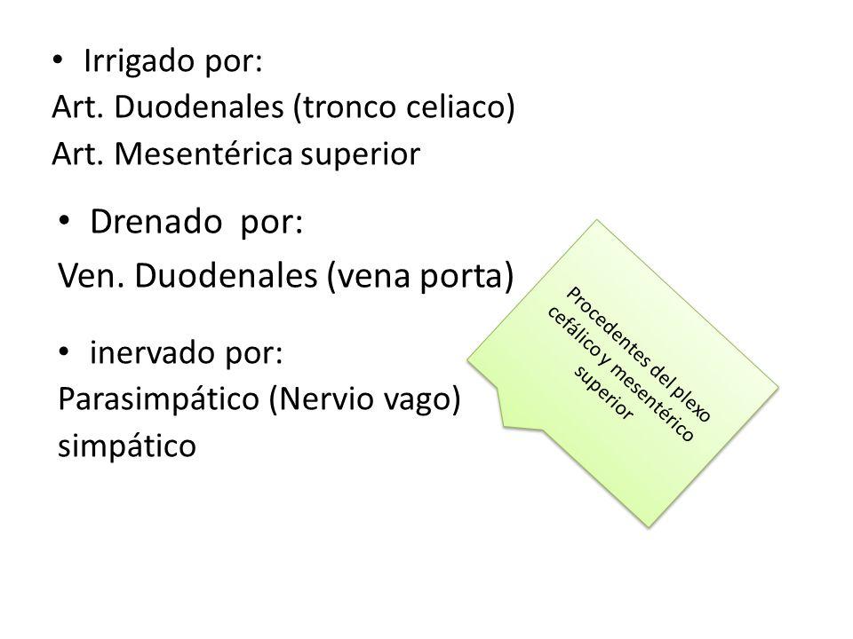Procedentes del plexo cefálico y mesentérico superior