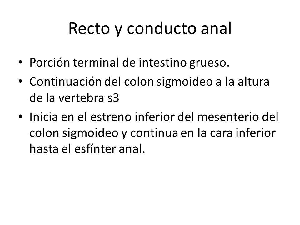 Recto y conducto anal Porción terminal de intestino grueso.