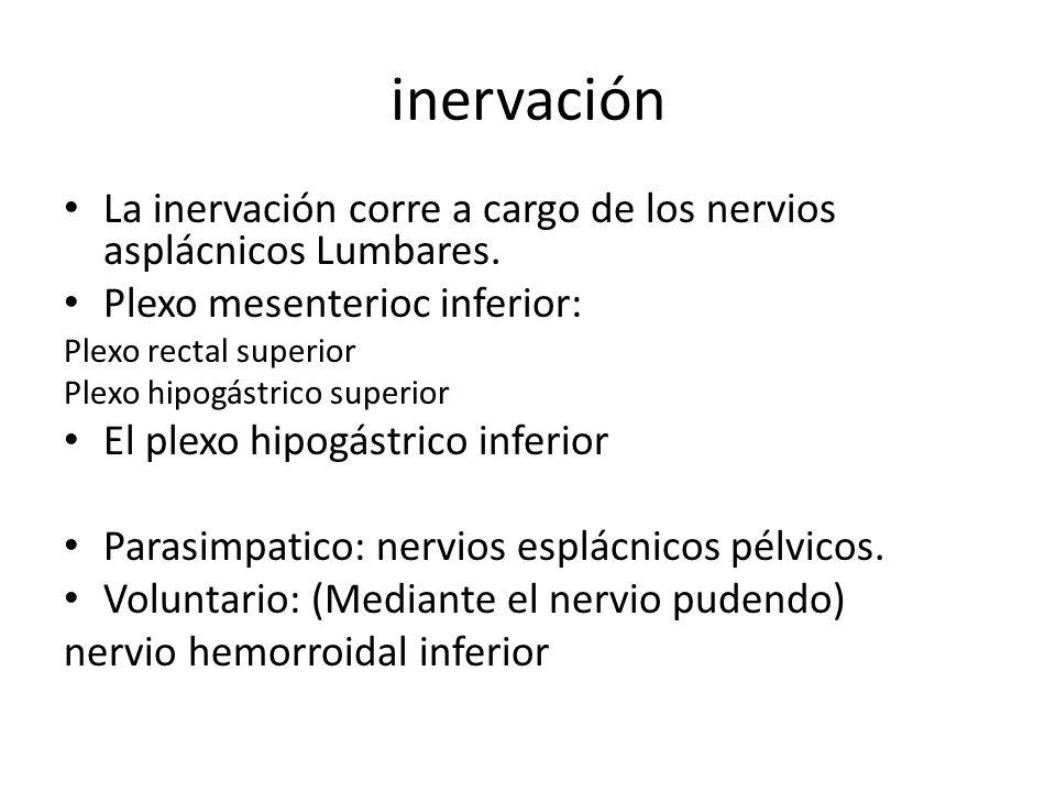 inervación La inervación corre a cargo de los nervios asplácnicos Lumbares. Plexo mesenterioc inferior: