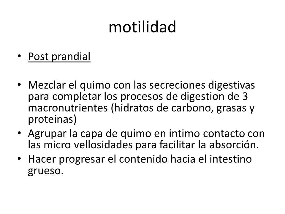 motilidad Post prandial