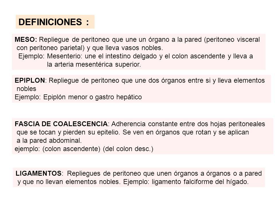 DEFINICIONES : MESO: Repliegue de peritoneo que une un órgano a la pared (peritoneo visceral. con peritoneo parietal) y que lleva vasos nobles.