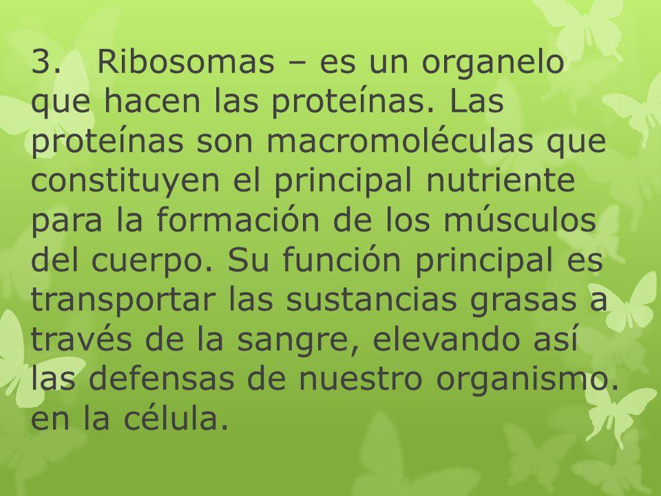 3. Ribosomas – es un organelo que hacen las proteínas
