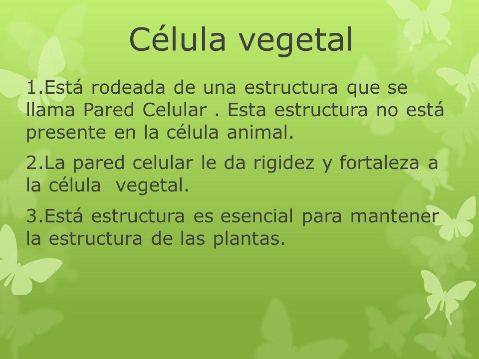 Célula vegetal