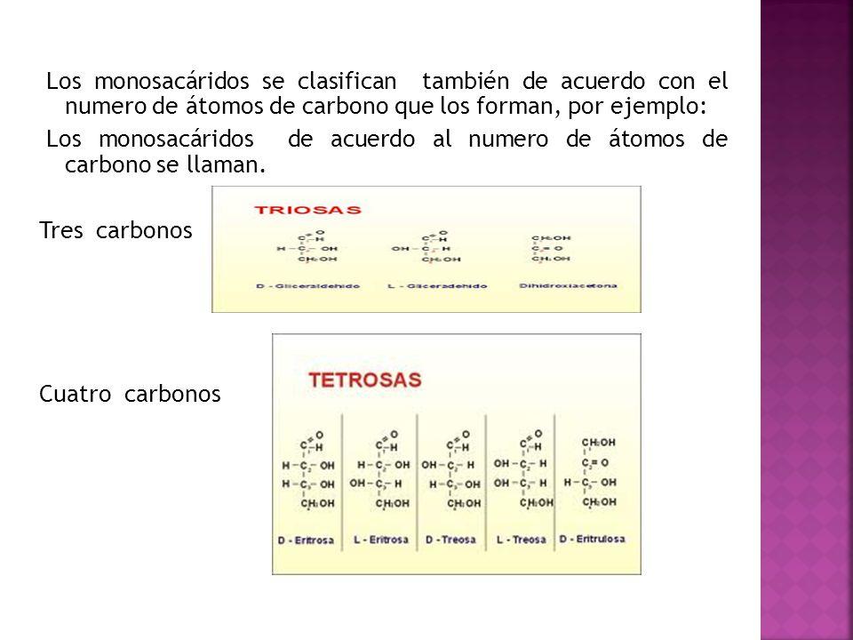 Los monosacáridos se clasifican también de acuerdo con el numero de átomos de carbono que los forman, por ejemplo: Los monosacáridos de acuerdo al numero de átomos de carbono se llaman.