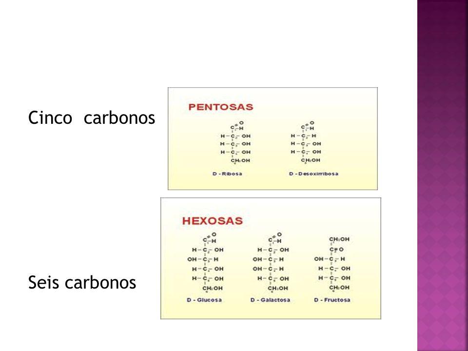 Cinco carbonos Seis carbonos