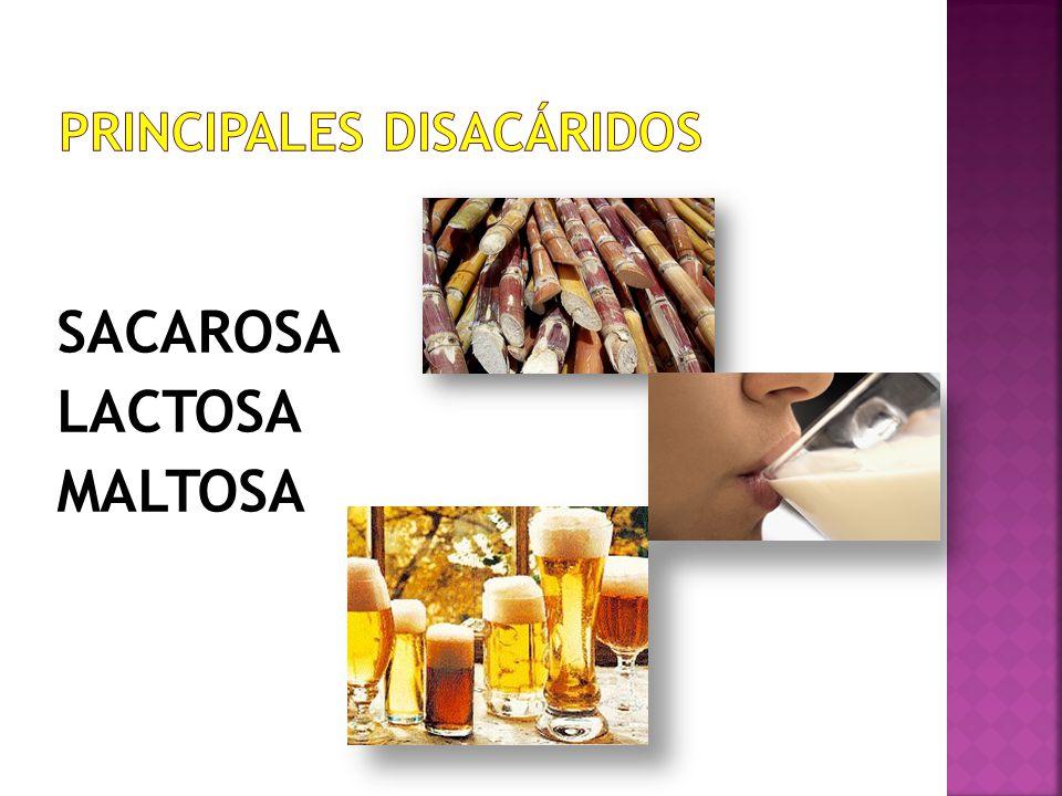 PRINCIPALES DISACÁRIDOS