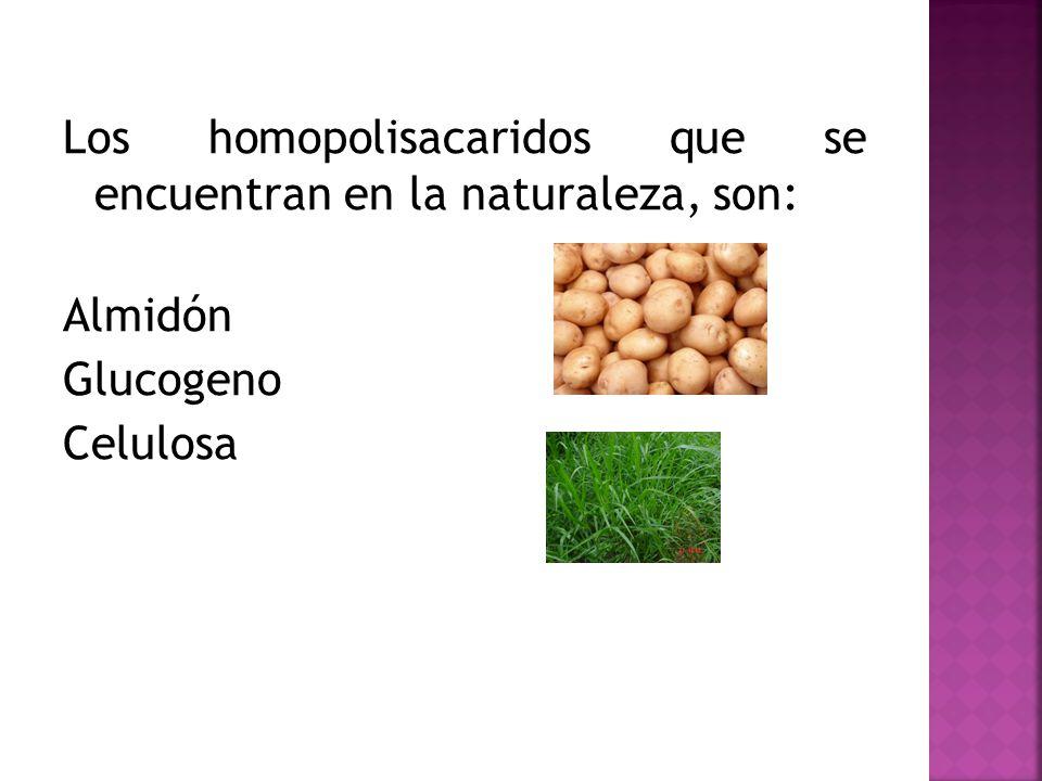 Los homopolisacaridos que se encuentran en la naturaleza, son: Almidón Glucogeno Celulosa