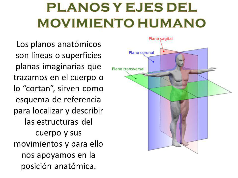 PLANOS Y EJES DEL MOVIMIENTO HUMANO - ppt video online descargar
