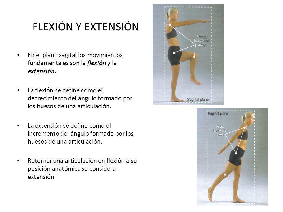 FLEXIÓN Y EXTENSIÓN En el plano sagital los movimientos fundamentales son la flexión y la extensión.
