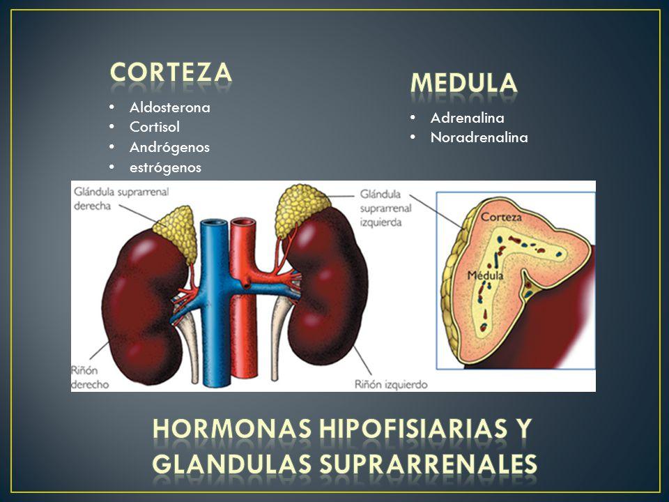 HORMONAS HIPOFISIARIAS Y GLANDULAS SUPRARRENALES