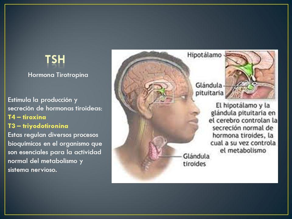 TSH Hormona Tirotropina