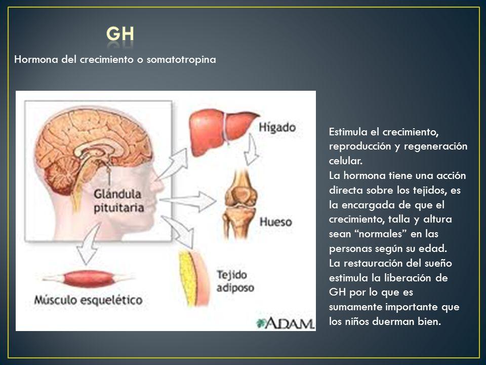 GH Hormona del crecimiento o somatotropina