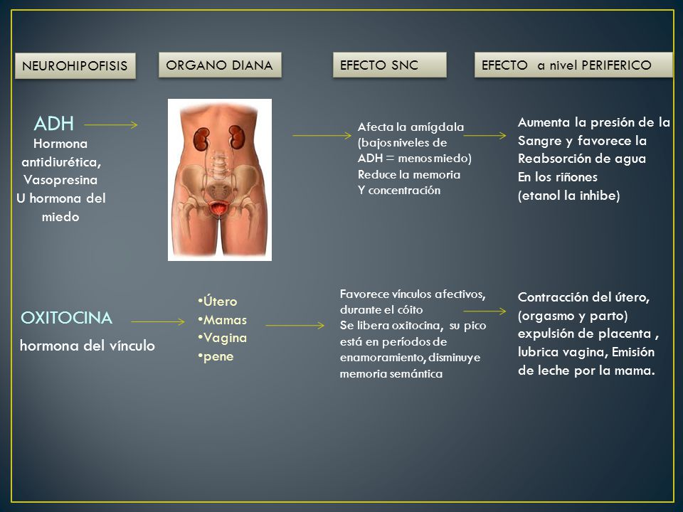 Hormona antidiurética, Vasopresina
