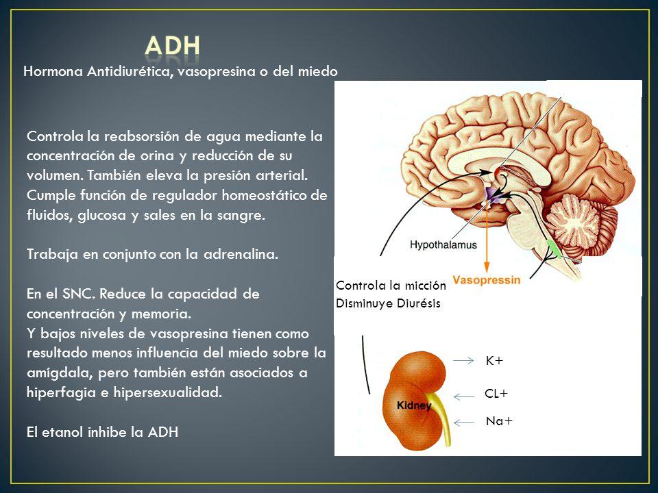 ADH Hormona Antidiurética, vasopresina o del miedo
