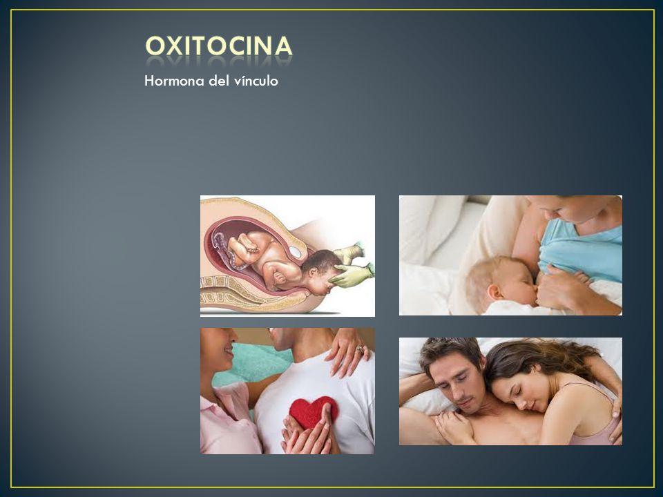 OXITOCINA Hormona del vínculo Contracciones del útero