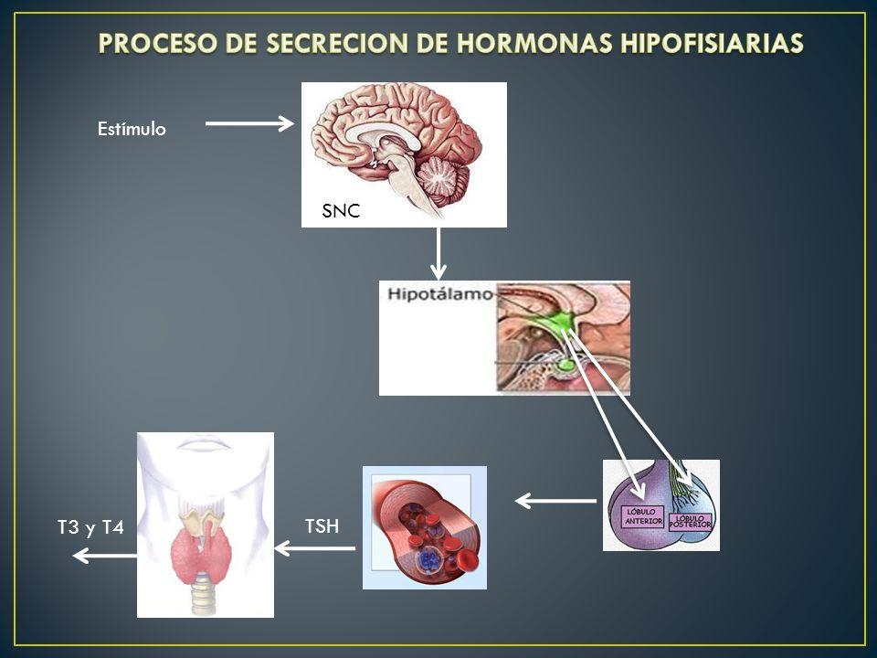 PROCESO DE SECRECION DE HORMONAS HIPOFISIARIAS