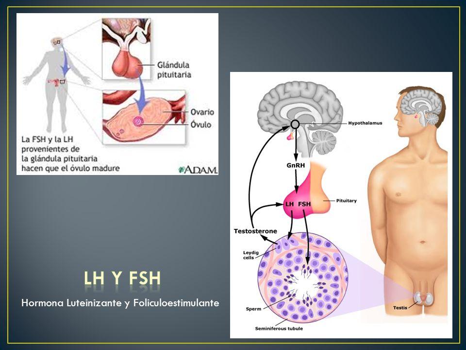 LH y FSH Hormona Luteinizante y Foliculoestimulante