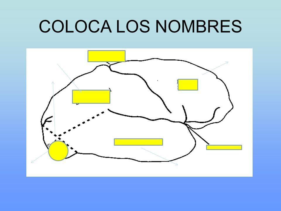 COLOCA LOS NOMBRES
