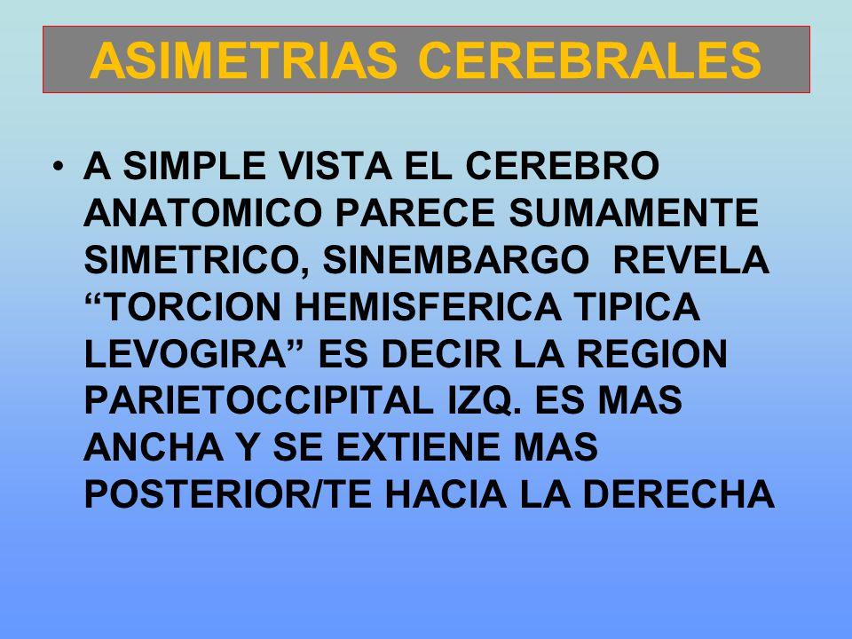 ASIMETRIAS CEREBRALES