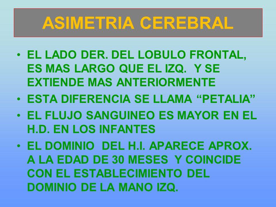 ASIMETRIA CEREBRAL EL LADO DER. DEL LOBULO FRONTAL, ES MAS LARGO QUE EL IZQ. Y SE EXTIENDE MAS ANTERIORMENTE.