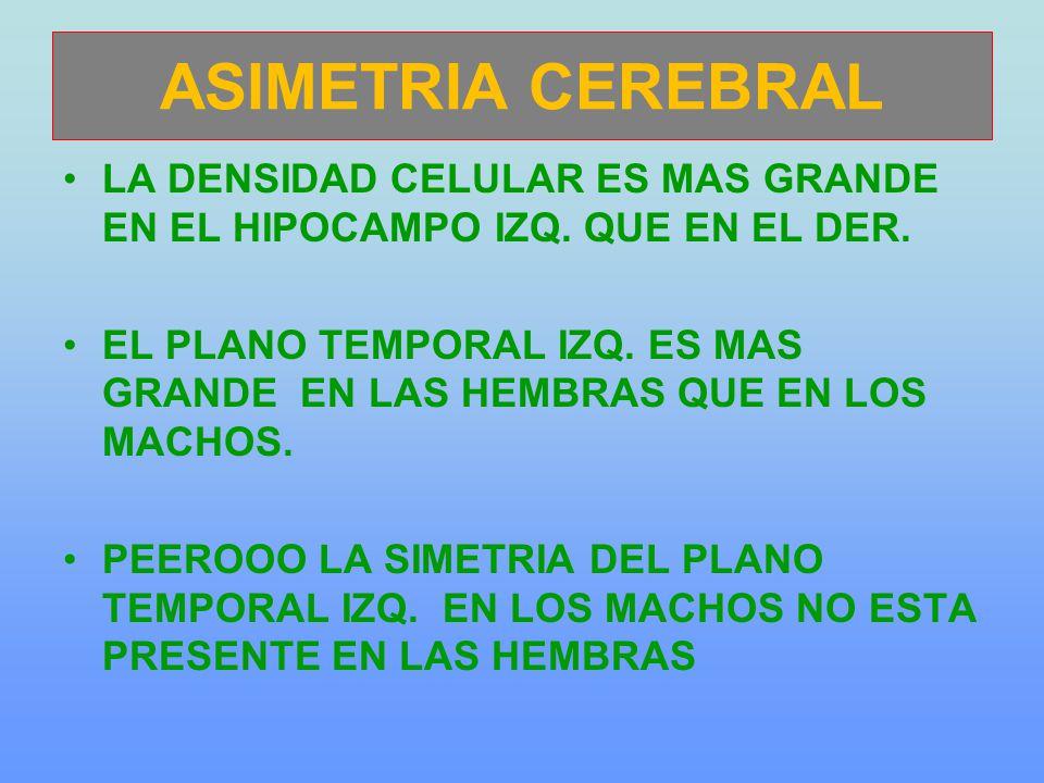 ASIMETRIA CEREBRAL LA DENSIDAD CELULAR ES MAS GRANDE EN EL HIPOCAMPO IZQ. QUE EN EL DER.