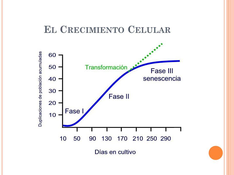 El Crecimiento Celular