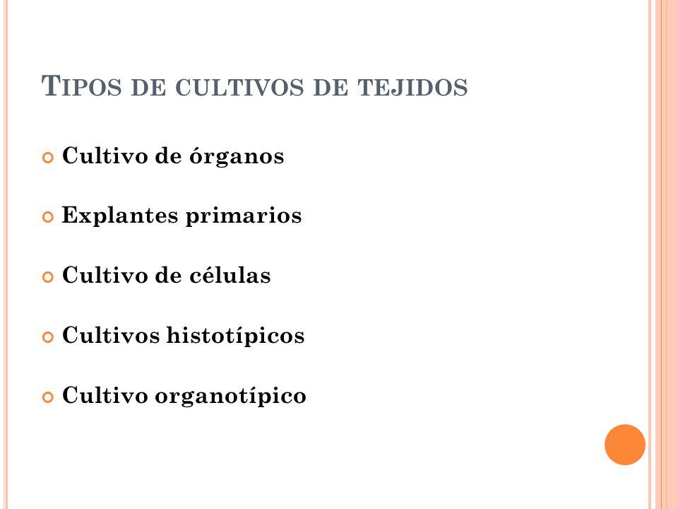 Tipos de cultivos de tejidos