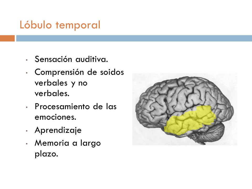 Lóbulo temporal Sensación auditiva.