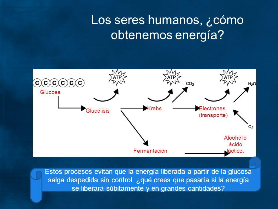 Los seres humanos, ¿cómo obtenemos energía