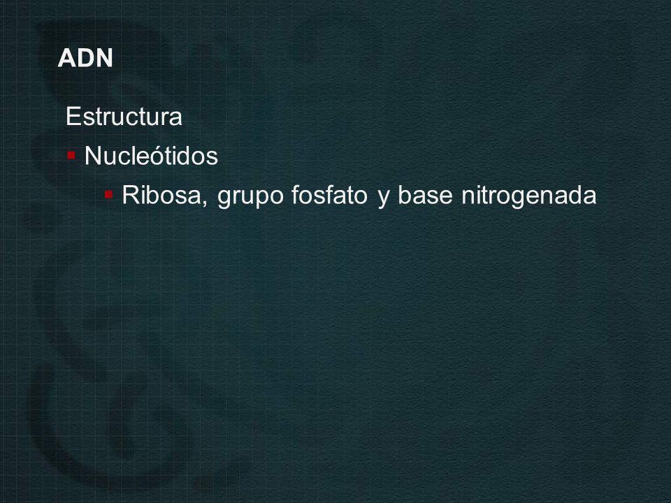 ADN Estructura Nucleótidos Ribosa, grupo fosfato y base nitrogenada