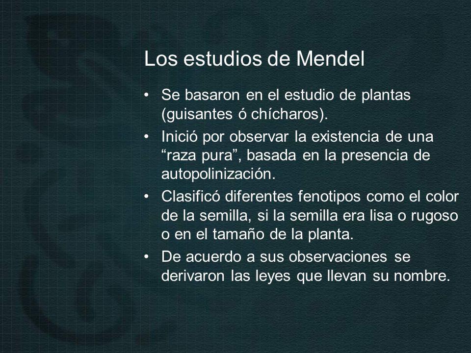 Los estudios de Mendel Se basaron en el estudio de plantas (guisantes ó chícharos).