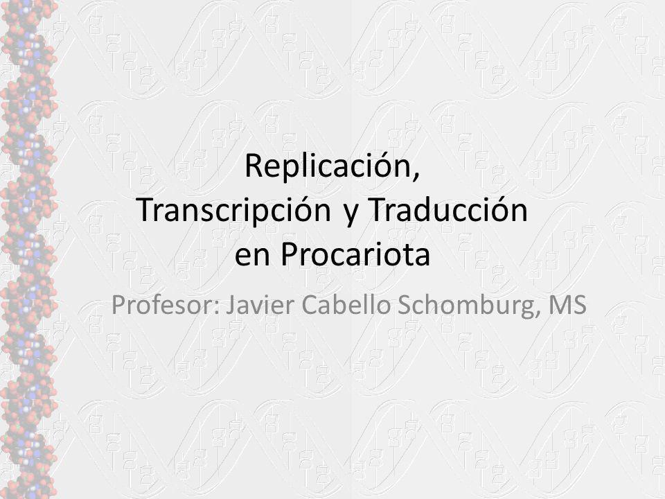 Replicación, Transcripción y Traducción en Procariota