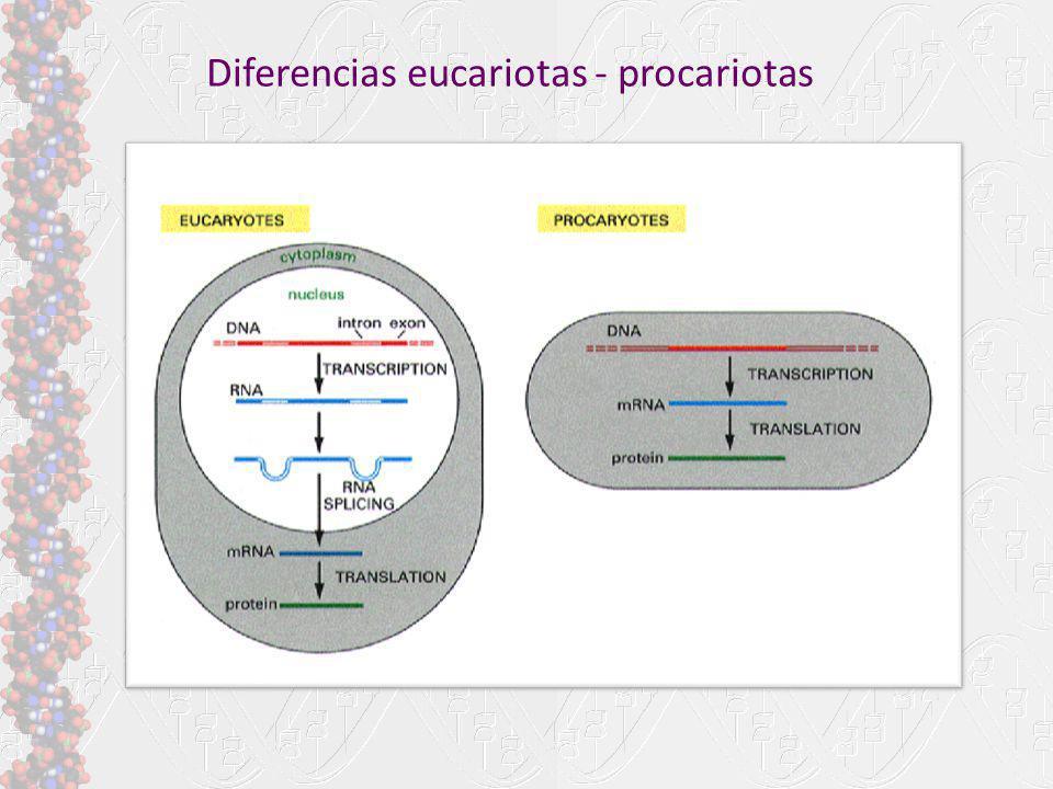 Diferencias eucariotas - procariotas
