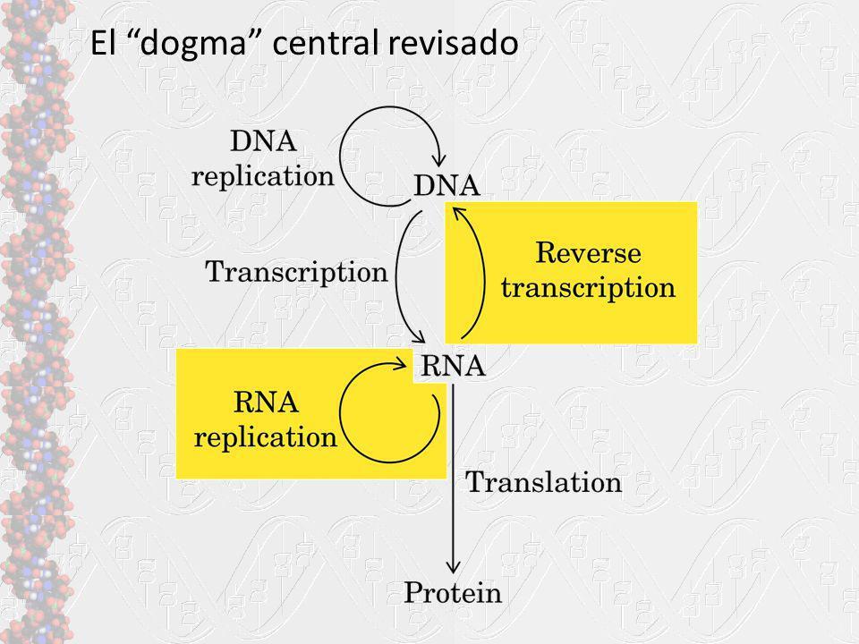 El dogma central revisado