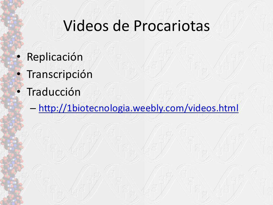 Videos de Procariotas Replicación Transcripción Traducción