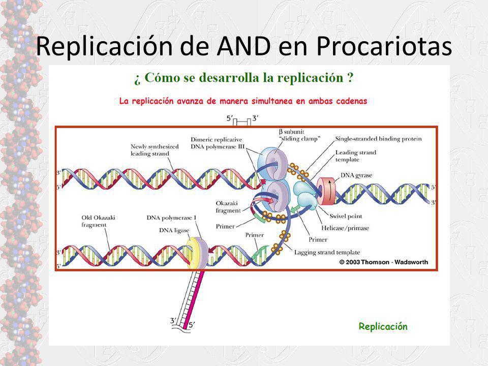 Replicación de AND en Procariotas