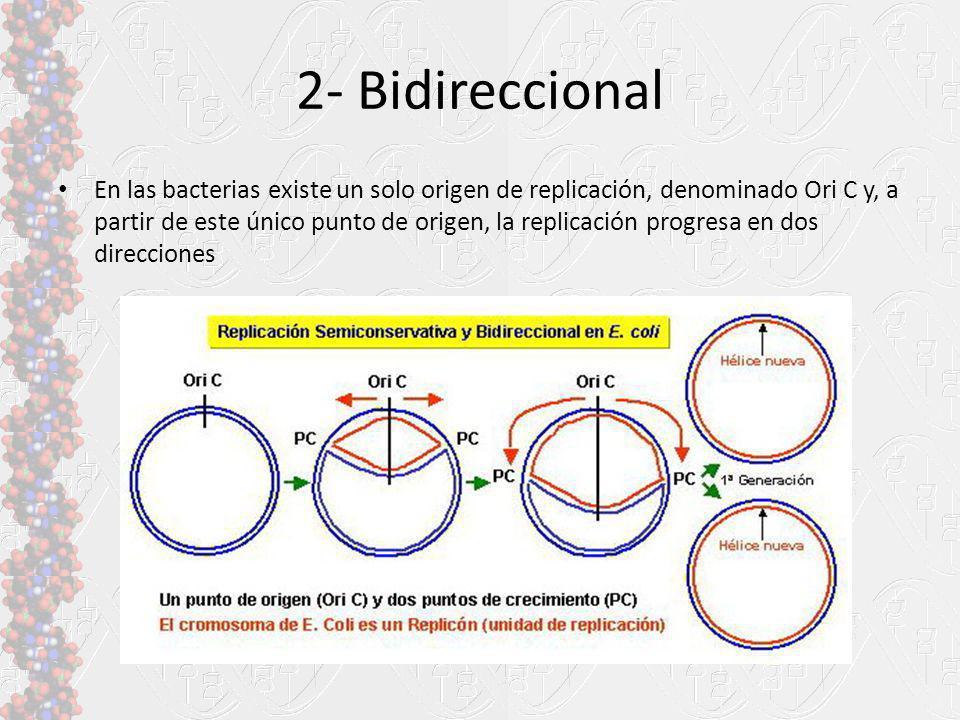 2- Bidireccional