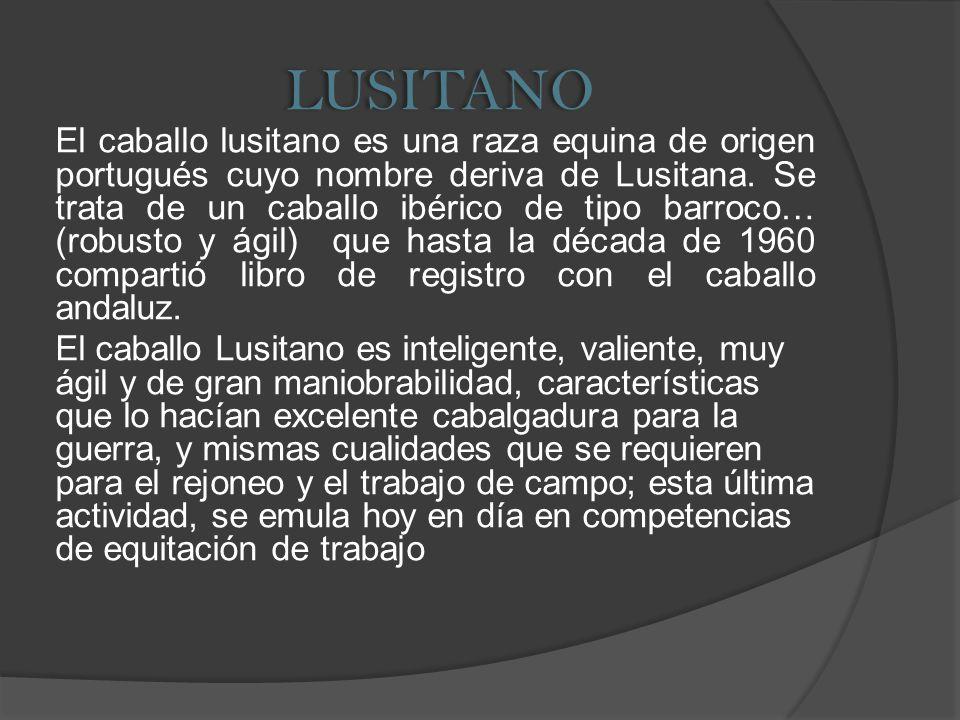 LUSITANO
