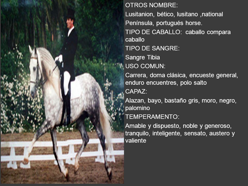 OTROS NOMBRE: Lusitanion, bético, lusitano ,national. Península, portugués horse. TIPO DE CABALLO: caballo compara caballo.