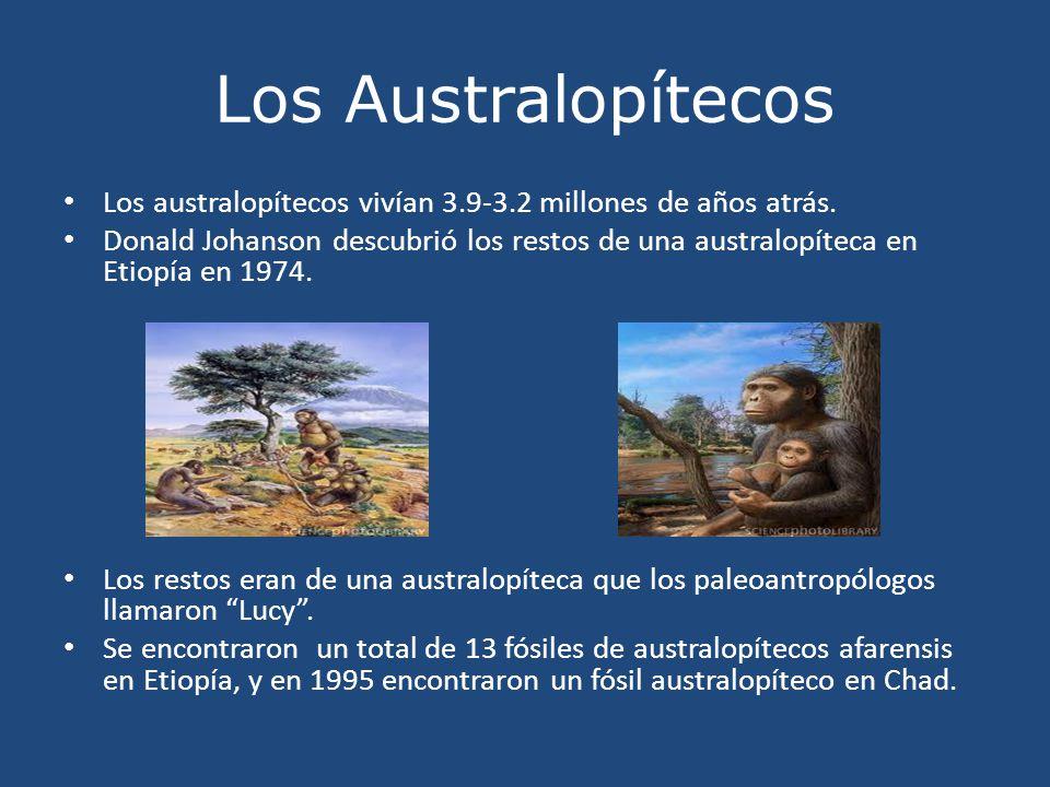 Los Australopítecos Los australopítecos vivían 3.9-3.2 millones de años atrás.