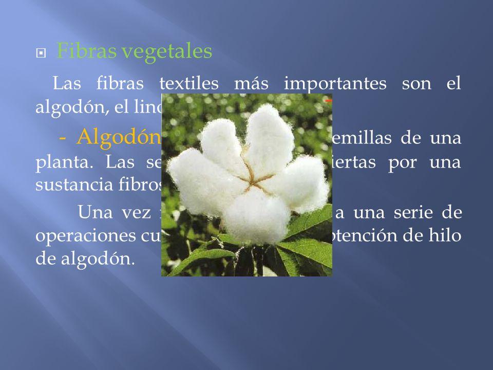 Fibras vegetales Las fibras textiles más importantes son el algodón, el lino y el esparto.