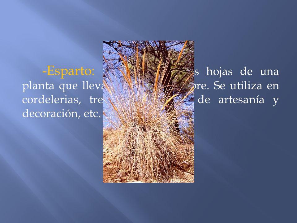 -Esparto: se obtiene de las hojas de una planta que lleva su mismo nombre.