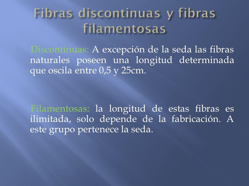 Fibras discontinuas y fibras filamentosas