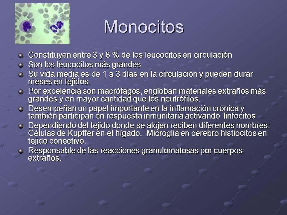 Monocitos Constituyen entre 3 y 8 % de los leucocitos en circulación