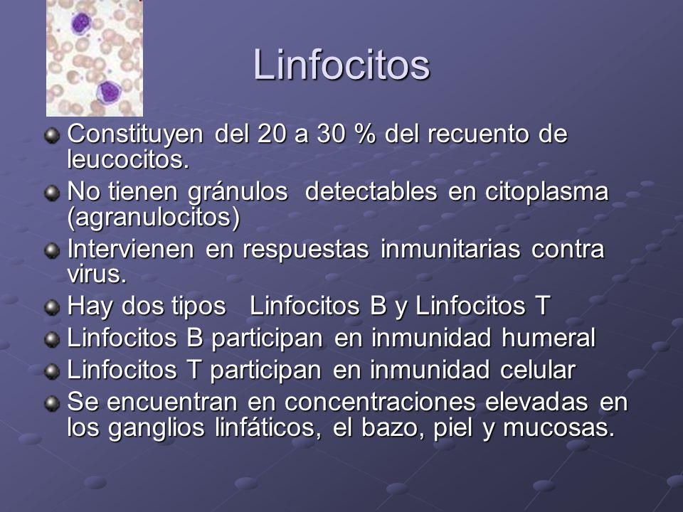Linfocitos Constituyen del 20 a 30 % del recuento de leucocitos.