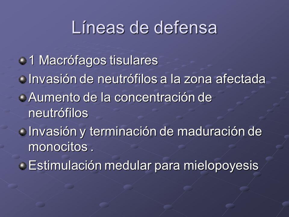 Líneas de defensa 1 Macrófagos tisulares