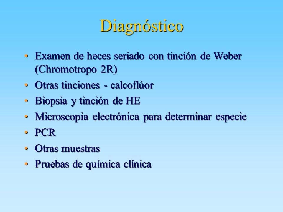 Diagnóstico Examen de heces seriado con tinción de Weber (Chromotropo 2R) Otras tinciones - calcoflúor.