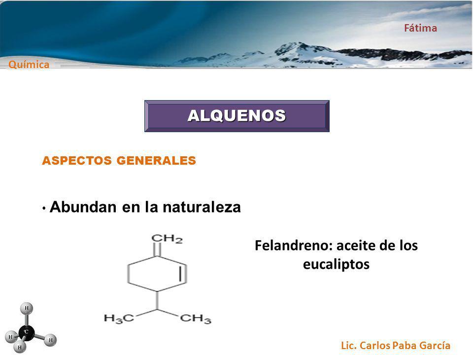 Felandreno: aceite de los eucaliptos