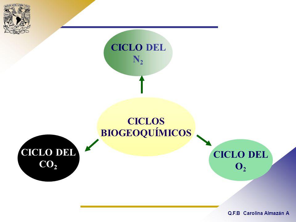 CICLO DEL N2 CICLOS BIOGEOQUÍMICOS CICLO DEL CO2 CICLO DEL O2