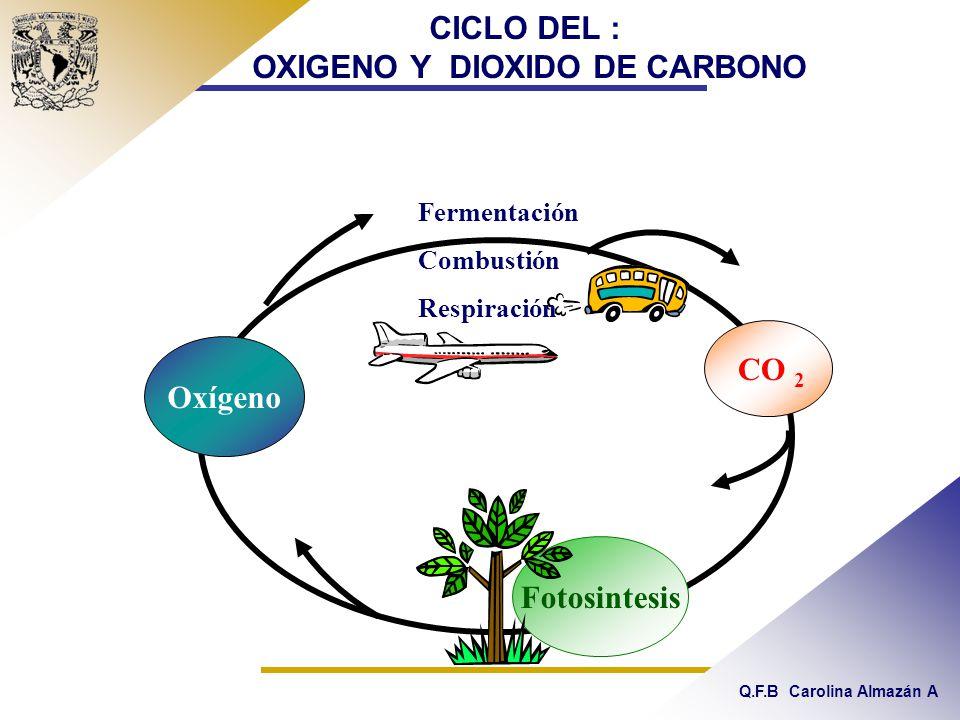 CICLO DEL : OXIGENO Y DIOXIDO DE CARBONO